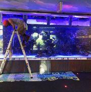 обслуживание аквариумов,  океанариумов,  террариумов и палюдариумов