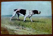 Редкая открытка.На стойке. 1916 год.