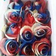 Поставки цветов из Эквадора!!!